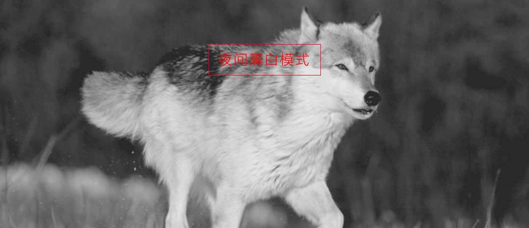 ATN双筒昼夜两用数码夜视仪 BINOX-HD 4-16x 可拍照 摄录